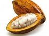 cacao-fruit-cameroon-view1.jpg